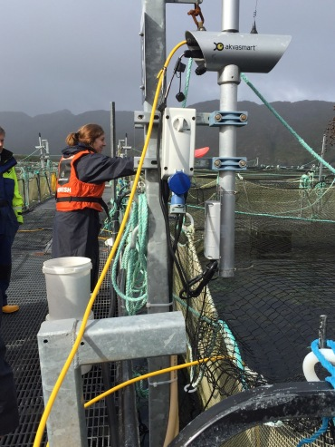 Fish feeding @ Marine Harvest