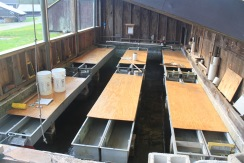 Hatchery in CT