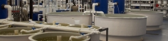 On-site facilities (RAS)